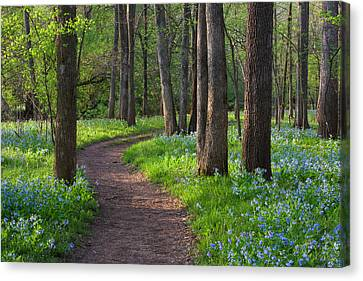Bull Run Occoquan Trail April Canvas Print by Mark VanDyke