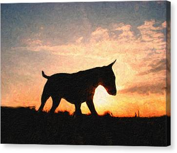 Bull Terrier At Sunset Canvas Print by Michael Tompsett