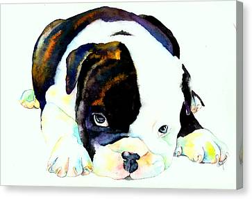 Bulldog Puppy Canvas Print by Christy  Freeman