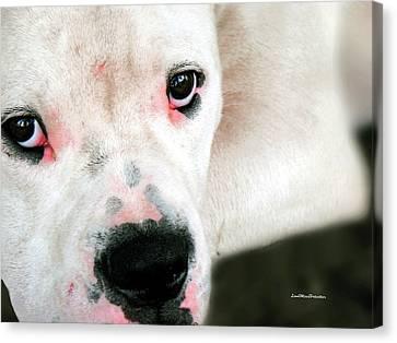 Buy Dog Art Canvas Print - Bulldog Rana Portrait 22 by Miss Pet Sitter