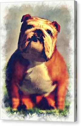 Bulldog... Canvas Print