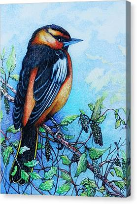 Orioles Canvas Print - Bullock's Oriole by Catherine Robertson
