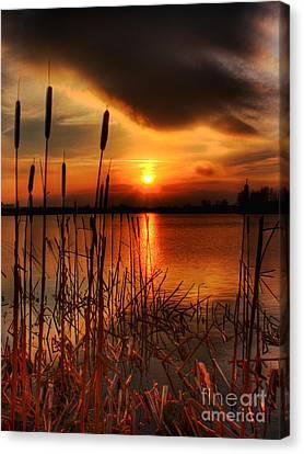 Bullrush Sunset Canvas Print by Kim Shatwell-Irishphotographer