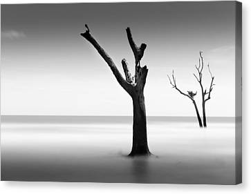 Bulls Island Vii Canvas Print by Ivo Kerssemakers