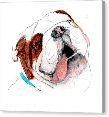 Canvas Print featuring the drawing Bully For You by Barbara Giordano