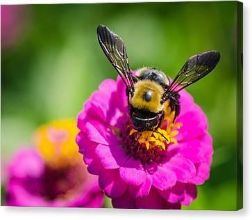 Bumble Bee Macro Image Canvas Print