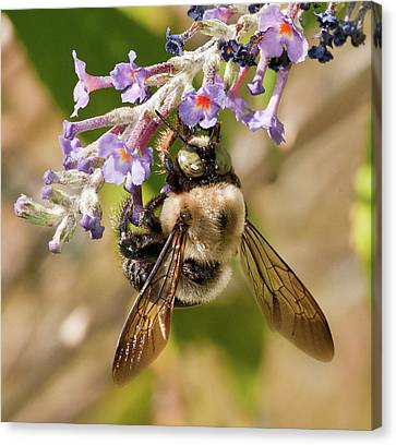 Canvas Print featuring the photograph Bumble Bee Up Close And Personal by Lara Ellis
