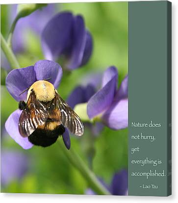 Bumble Bee With Zen Quote Canvas Print by Heidi Hermes
