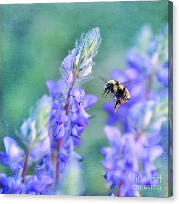 Bumblebee And Lupine Canvas Print by Priska Wettstein