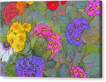 Bunch Of Colorful Primroses Canvas Print