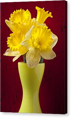 Bunch Of Daffodils Canvas Print by Garry Gay