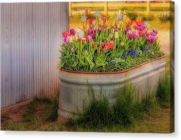 Canvas Print featuring the photograph Bunch Of Tulips by Susan Candelario