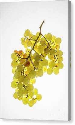 Bunch Of White Grapes Canvas Print