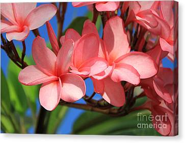 Canvas Print featuring the photograph Bunches Of Pink Plumerias by Edward R Wisell
