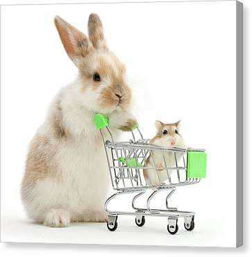 Bunny Shopping Canvas Print