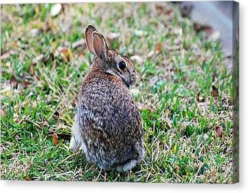 Canvas Print featuring the photograph Bunny by Teresa Blanton