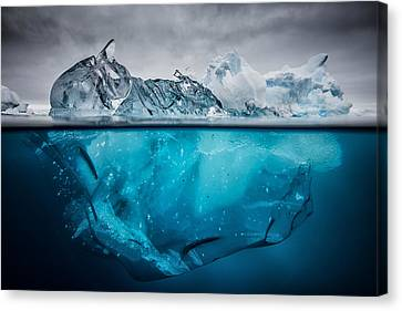 Buoyancy Canvas Print by Justin Hofman
