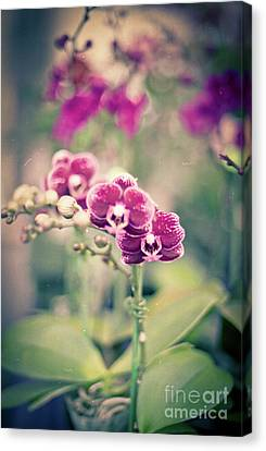 Burgundy Orchids Canvas Print by Ana V Ramirez