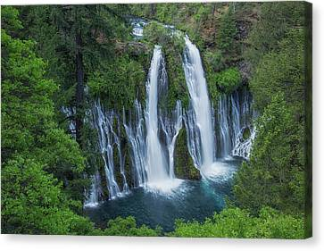 Canvas Print featuring the photograph Burney Creek Falls by Patricia Davidson