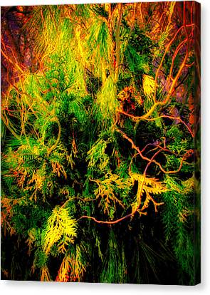 Burning Bush Canvas Print by Ronald Watkins