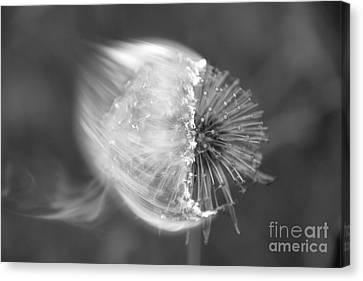 Burning Dandelion Canvas Print by Ludmilla Resch