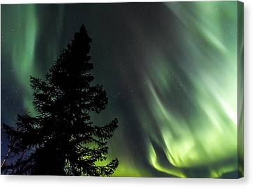 Burning Tree 3 Canvas Print by Kyle Lavey