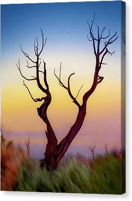 Burnt Cedar At Sunset Canvas Print by Gary Warnimont