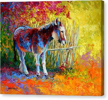 Burro And Bouganvillia Canvas Print