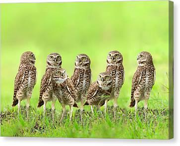 Burrowing Owl Canvas Print by Thy Bun