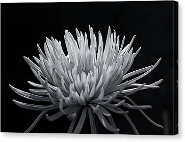 Canvas Print featuring the photograph Burst 2 by Sheryl Thomas