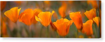 Gallery Wrap Canvas Print - Burst by Mikes Nature