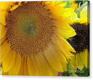 Nature Canvas Print - Burst Of Sunshine by Terry Anderson
