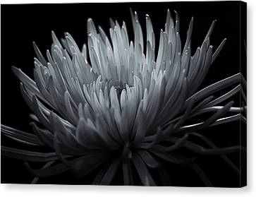 Canvas Print featuring the photograph Burst by Sheryl Thomas