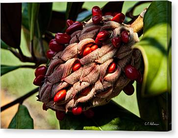 Bursting Forth Canvas Print by Christopher Holmes