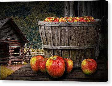 Bushel Of Apples During Harvest Canvas Print by Randall Nyhof