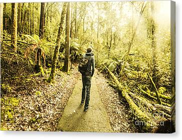 Canvas Print featuring the photograph Bushwalking Tasmania by Jorgo Photography - Wall Art Gallery