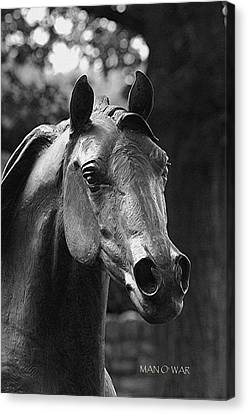 Bust Of Man O War 2 - Kentucky Horse Park Canvas Print by Thia Stover