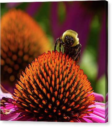 Busy As A ... Just Busy Canvas Print