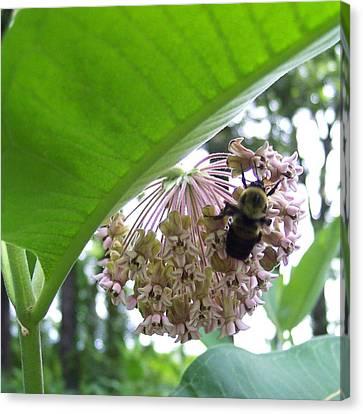 Busy As A Bee Canvas Print by Anna Villarreal Garbis