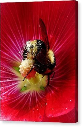 Busy As A Bee Canvas Print by JoAnn SkyWatcher