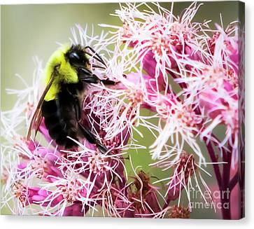 Canvas Print featuring the photograph Busy As A Bumblebee by Ricky L Jones
