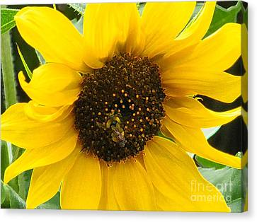 Busy Bee II Canvas Print