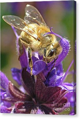 Busy Bee Canvas Print by Katie LaSalle-Lowery