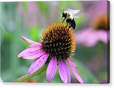 Canvas Print featuring the photograph Busy Bee by Trina Ansel