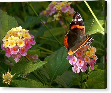 Canvas Print featuring the photograph Busy Butterfly Side 1 by Felipe Adan Lerma