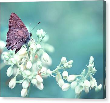 Canvas Print featuring the photograph Buterfly Dreamin' by Mark Fuller