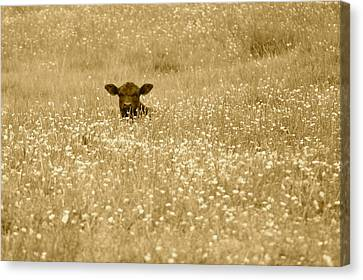 Buttercup In Sepia Canvas Print