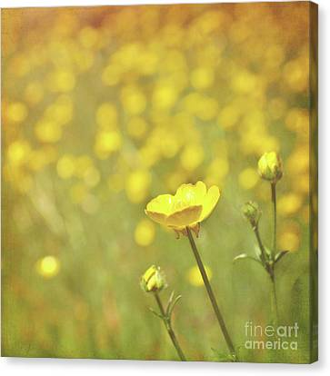 Buttercups Canvas Print by Lyn Randle