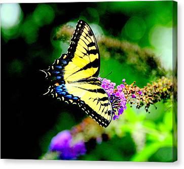 Butterflie Canvas Print by Aron Chervin