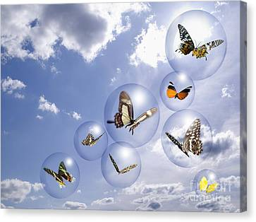 Butterflies And Bubbles Canvas Print by Tony Cordoza